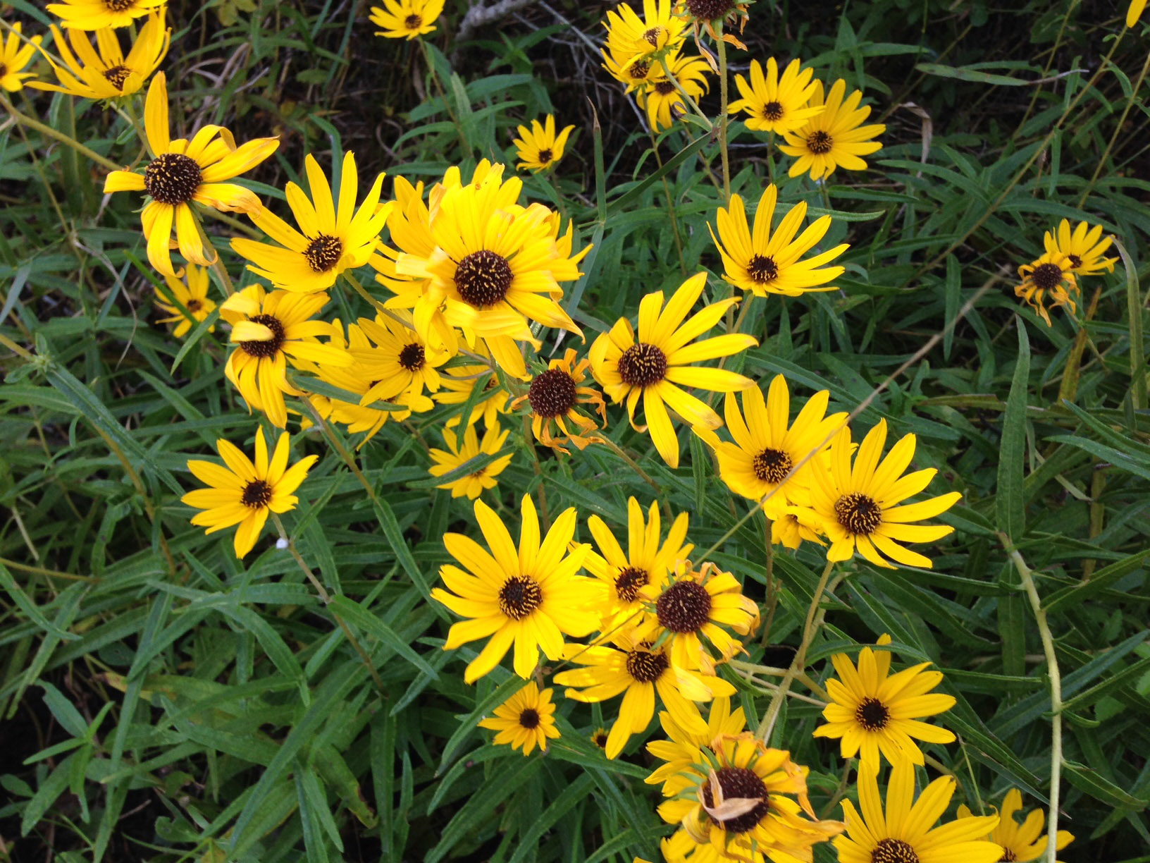 Q What Is The Bright Yellow Flower Growing In The Ditches Now